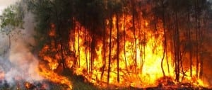 Bushfire Attack Level Report BAL fire bush